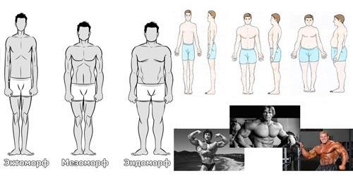 Типы мужских телосложений