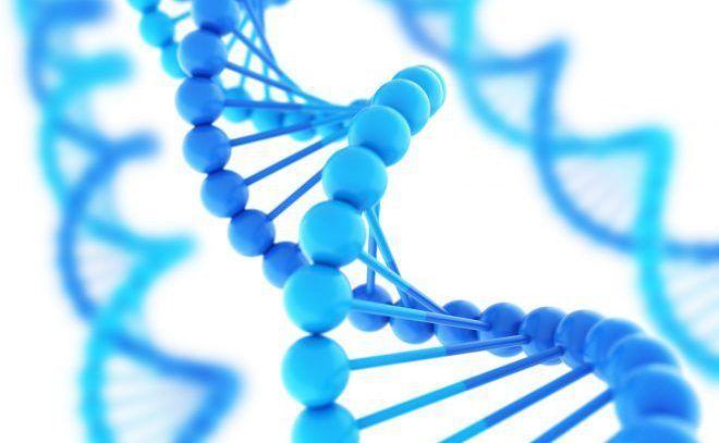 Генетика женщины