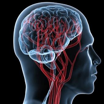 сосуды головного мозга