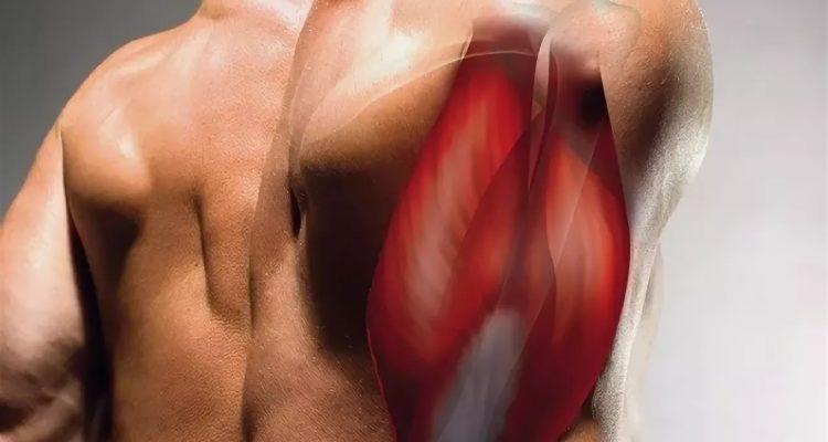 Мышцы антагонисты: что это такое и как их тренировать