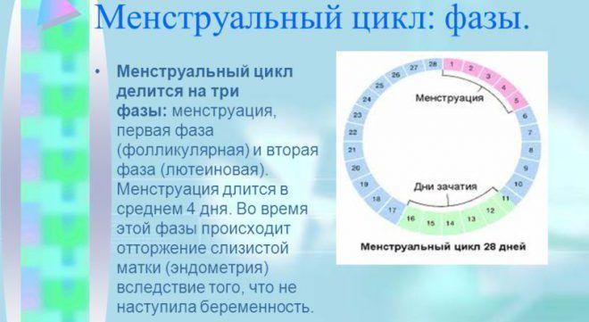 Менструация