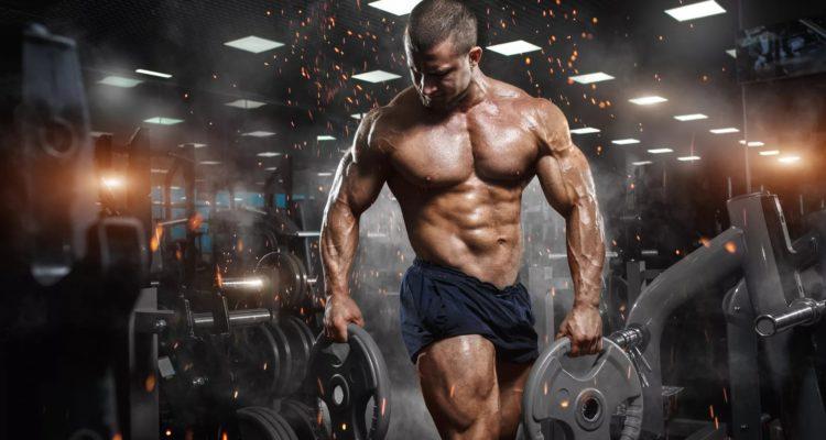 Мышцы человека: виды, схемы, анатомия