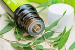 Масло чайного дерева – природный антисептик