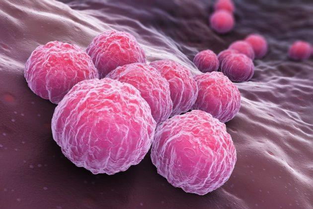 Анализ крови и мазок на хламидии при беременности