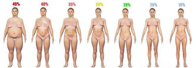 Наглядное изображение содержания жира у женщин