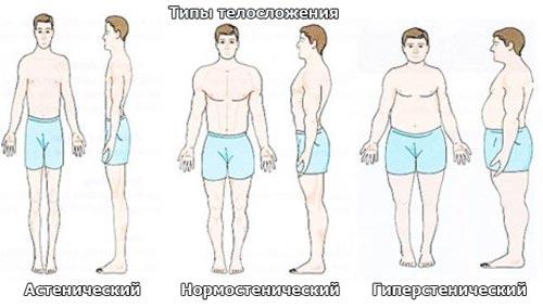 Астенический, нормостенический, гиперстенический типы