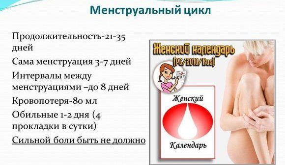 Менструальный цикл, что это такое