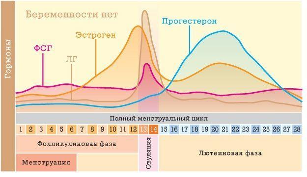 Нормальная продолжительность менструального цикла