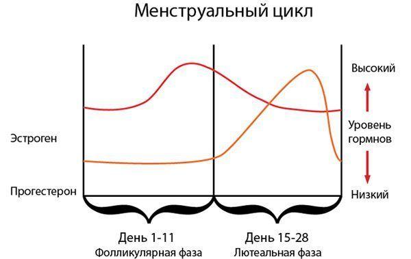 Увеличение менструального цикла