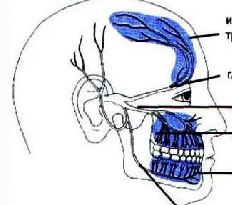 Болит зуб и отдает в висок