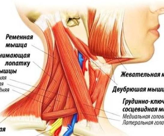 Болят мышцы шеи